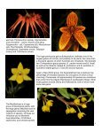 Miniature Orchids - Page 4