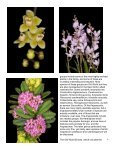 Miniature Orchids - Page 6