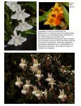 Miniature Orchids - Page 7