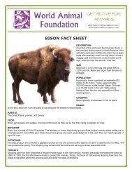 BISON FACT SHEET - World Animal Foundation