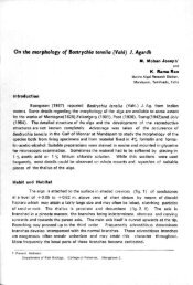 On the morphology of Bostrychia tenella (Vahl) 1 ... - Eprints@CMFRI