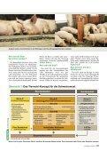 Bald 20 Millionen Tierwohl-Schweine? - Page 2
