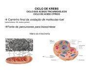 11 K_ Ciclo de Krebs.pdf - Ucg