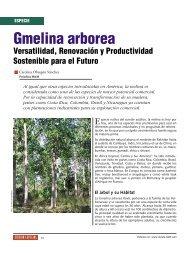 Gmelina arborea - Revista El Mueble y La Madera