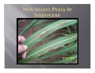 New Insect Pests in Sugarcane