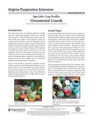 Ornamental Gourds - Virginia Cooperative Extension - Virginia Tech