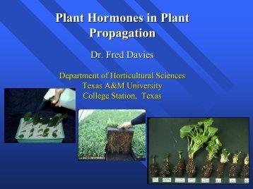 Plant Hormones in Plant Propagation Propagation - Aggie ...