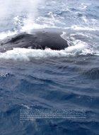 Biowissenschaften - Polare Ökosysteme im Wandel - Seite 4