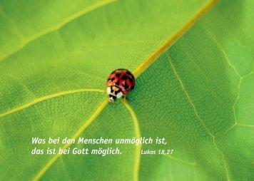 "Postkarte ""Marienkäfer"""