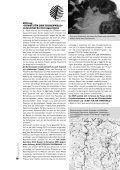 PDF - Bruno Manser Fonds - Seite 5