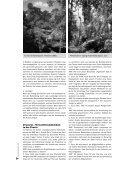 PDF - Bruno Manser Fonds - Seite 7