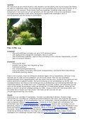 mindfulness retreat op ibiza met meditatie, yoga en dans - Coco Bliss - Page 2