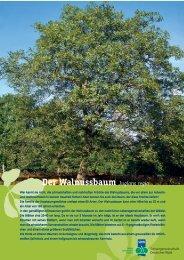 3010804 Walnuss A4 - Schutzgemeinschaft Deutscher Wald