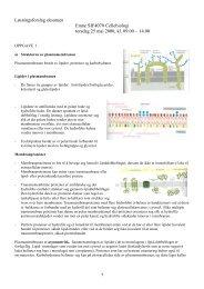 Løsningsforslag eksamen Emne SIF4070 Cellebiologi torsdag 25 ...