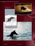 Photogallery - tutto arabi - Page 7