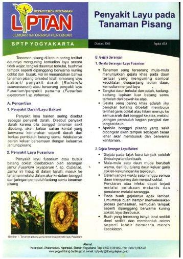 Teknologi pengolahan biji kakao bptp yogyakarta bptp yogyakarta ccuart Image collections
