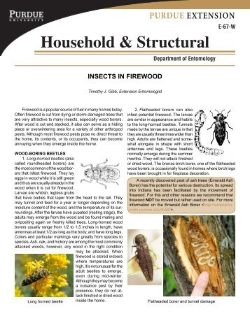 Insects in Firewood - Purdue Extension Entomology - Purdue ...
