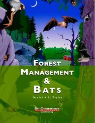 Forest Management & Bats - Bat Conservation International