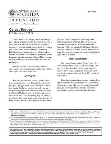 Carpet beetles - Polk County Extension Office - University of Florida