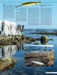 zur PDF-Datei - Kalles Angelshop - Seite 2