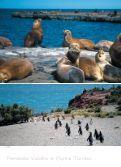 Patagonia - Orville Viaggi - Page 6