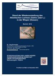 Lachse in der Wisper Bericht 2012 - Lorch im Rheingau