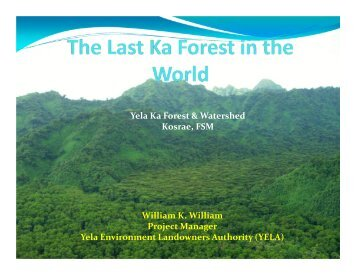 Yela Ka Forest & Watershed Kosrae, FSM - RarePlanet