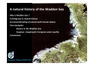 Why a Wadden Sea? Contingency in natural history