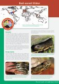 Red-eared Slider - Page 2