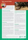Red-eared Slider - Page 4