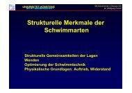 Strukturelle Merkmale der Schwimmarten - Universität Konstanz