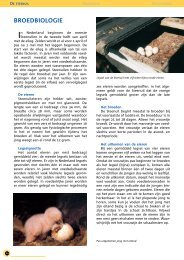 Broedbiologie - STeenuil Overleg NEderland