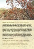 SEA BUCKTHORN - Crops for the Future - Page 2