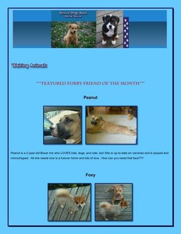 Peanut Foxy - Rescue Dogs Rock
