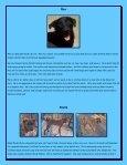 Peanut Foxy - Rescue Dogs Rock - Page 4