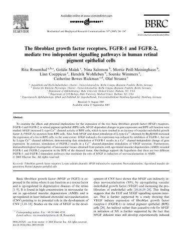 The fibroblast growth factor receptors, FGFR-1 and FGFR-2, mediate ...