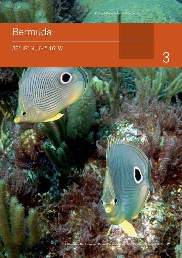 UK OT & CD 2011 Biodiversity snapshot - Bermuda - JNCC - Defra