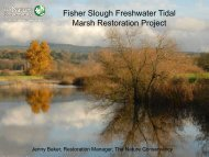 Fisher Slough Freshwater Tidal Marsh Restoration Project