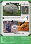 Schmetterlinge - Österreichische Naturschutzjugend - Seite 2
