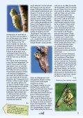 Schmetterlinge - Österreichische Naturschutzjugend - Seite 5