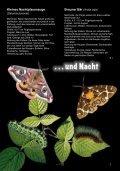 Schmetterlinge - Österreichische Naturschutzjugend - Seite 7