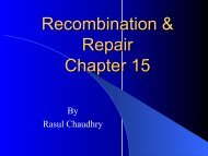 Recombination & Repair Chapter 15
