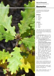 Waldbau & Klimawandel BE - Baumarten / Forêt et changement ...