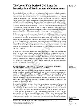 cultural relativism and human rights pdf