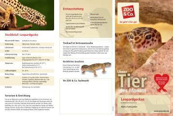 Leopardgeckos - Zoo & Co.