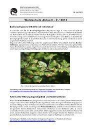 Waldschutz Aktuell - 2 / 2013 - WSL