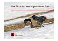 Das Birkhuhn: eine Vogelart unter Druck!