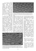 Newsletter #6 Jul 2013 - Page 6