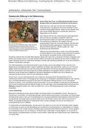 Salamander-Zählung in der Dämmerung Seite 1 ... - Sparkling Science