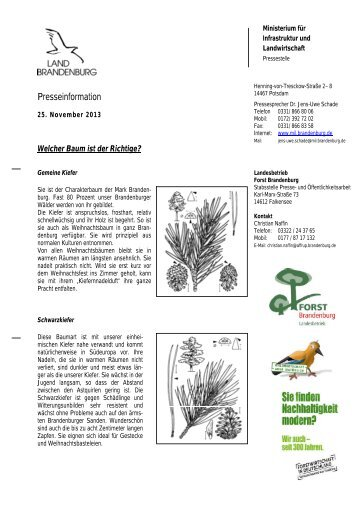 baumwahl13.pdf - Landesbetrieb Forst Brandenburg